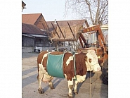 VV1049 Podnośnik temblakowy dla bydła