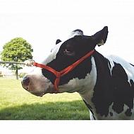 VV0510 Kantar dla krów